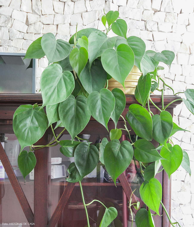 Plantas para usar no banheiro hist rias de casa e selvvva for Planta filodendro