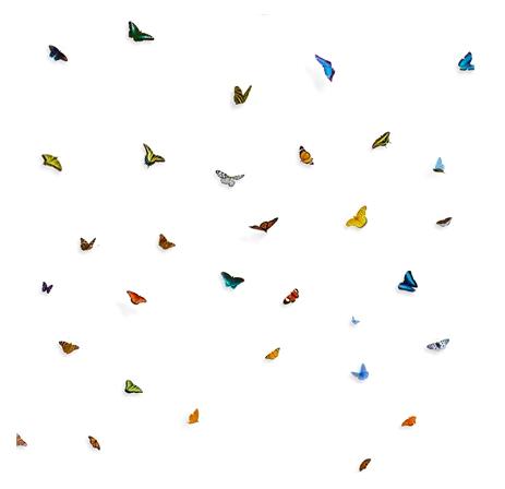 Painel borboleta
