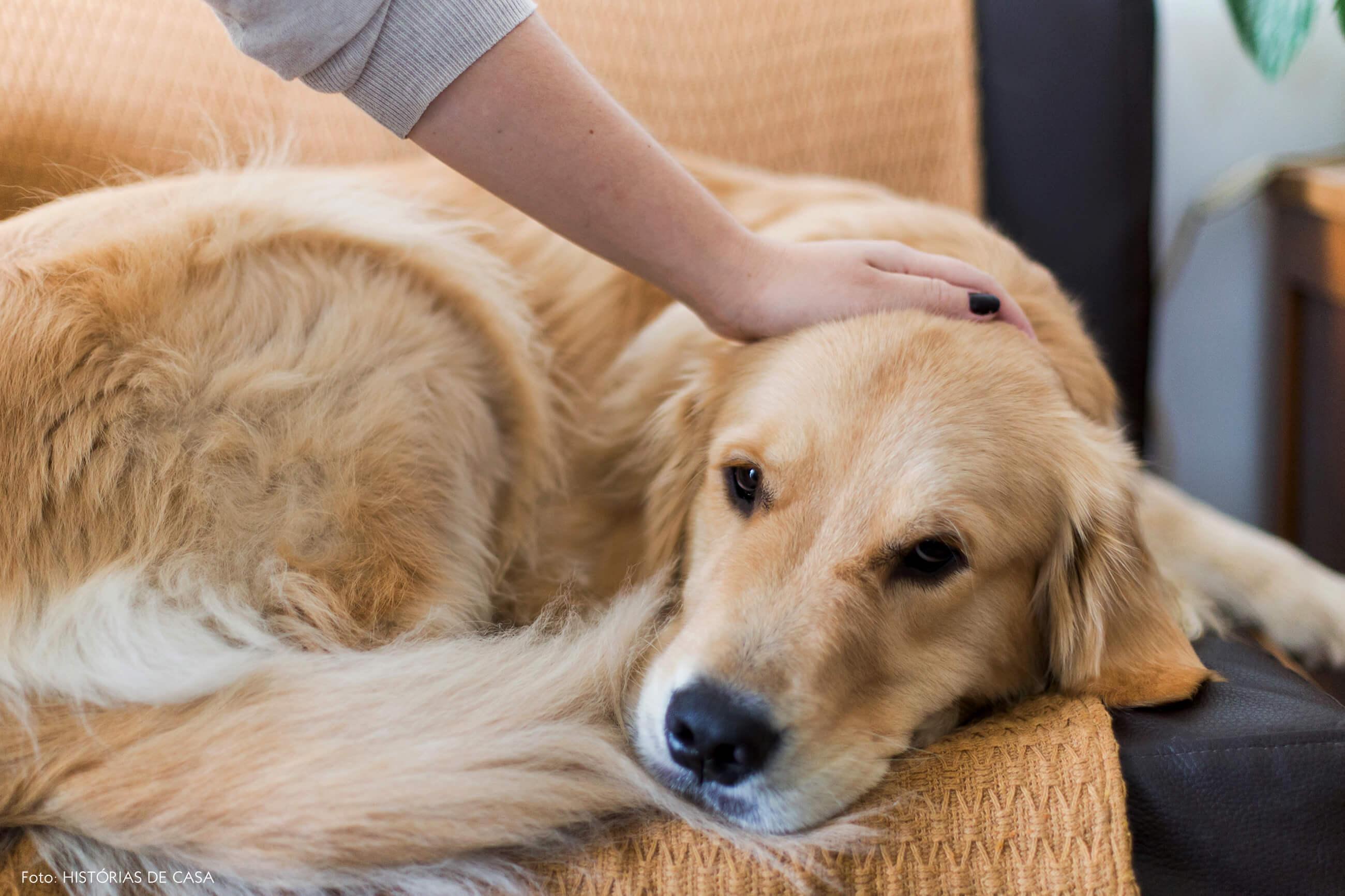 Sofá com manta para o cachorro dormir